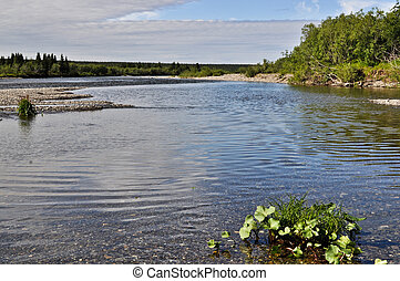 Pebbly shore wild Northern rivers - Summer river landscape...