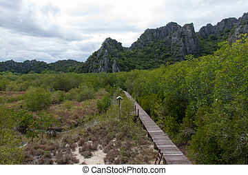 Wooden walkway towards in mangrove A transverse mountain