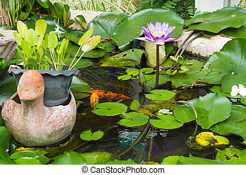 Water lily lotus flower with green leaves in the pond