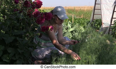 girl pick dill garden - young woman reap dill twigs squatted...