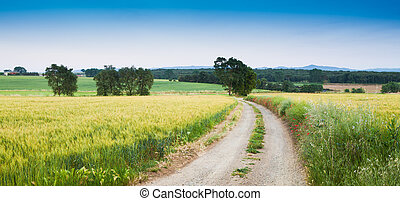 Rural scene with little pathway and wheat fields on...