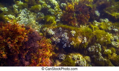Corals On The Bottom Of the Sea