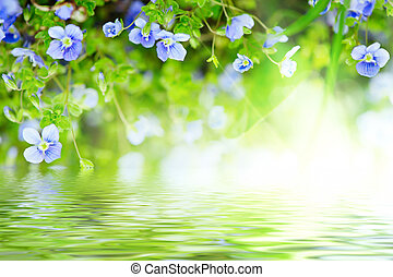 Forget-me-not flowers - Forget-me-not tender flowers...