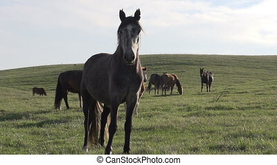 Mare on a Background of the Herd - Beautiful horse standing...