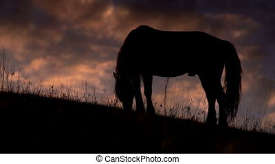 Evening Pasture in the Foothills - Grazing horse on a...