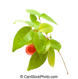 Eugenia uniflora fruit on a branch isolated on white...