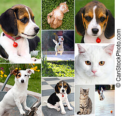 Collage of different cute pets, dogs and cats.