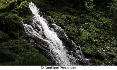 The original woods waterfall - White waterfall in the lush...