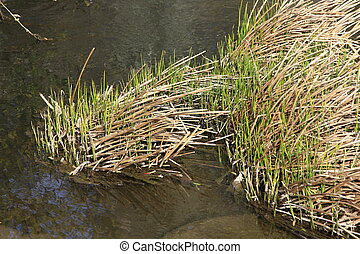 reeds along a river of clear water