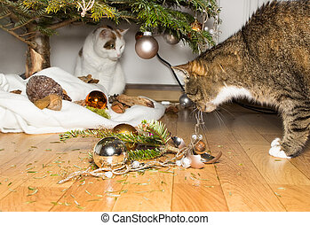 A nice mess - A cat sniffs on several broken christmas balls