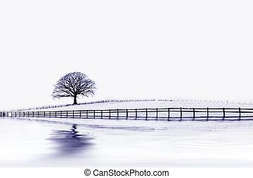 橡木, 樹, 冬天, 美麗