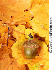 The acorn - One acorn on background of oak leaves