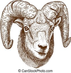 illustration of engraving ram head - vector illustration of...