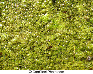 lichen background texture