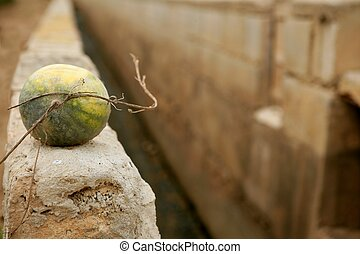 Watermelon over rrigation ditch canal