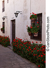 Flowers in a Monastery - Pots of red geraniums lining the...