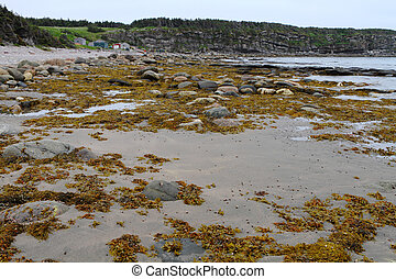 Fishing village and the shore - Algae covered shore and...