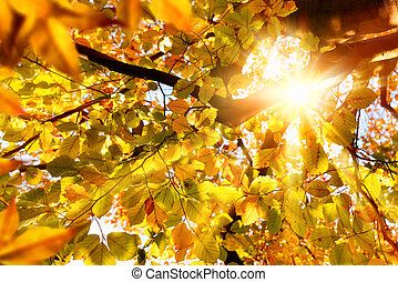 Sun shining through golden leaves