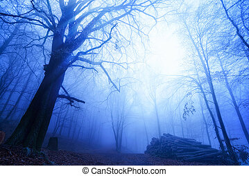 Cool mood in a foggy wood - Blue twilight mood on a walking...