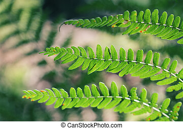 Green fern leaves in closeup detail