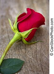 Red rose over old aged teak wood, romantic spring love...