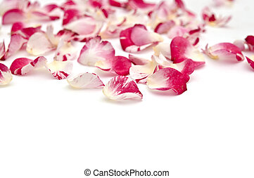 Petals of roses on a white background