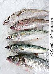 pez, mariscos, encima, hielo