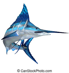 Blue Marlin Ocean Fish - The Blue Marlin is a predator and a...