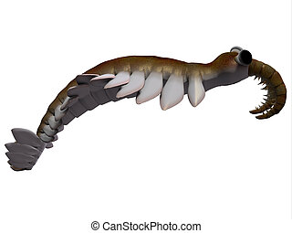 Cambrian Anomalocaris Side Profile - Anomalocaris is the...