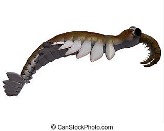 Cambrian Anomalocaris Side Profile - Anomalocaris is the...