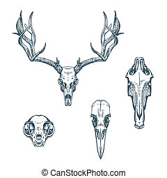 Animal Scull Set Deer Horse Cat Crow - Animal skulls set...