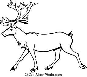 Caribou Walking - vector line drawing of a caribou or...