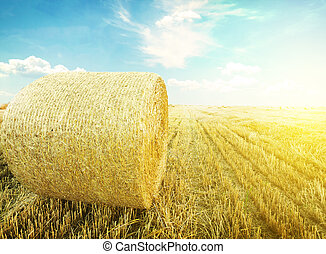 Field - hay-roll on meadow nature background