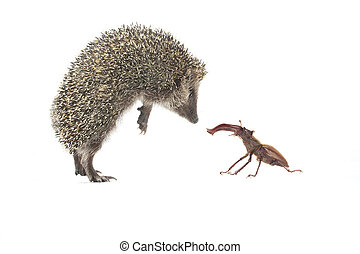 hedgehog and bug on a white background on a white background