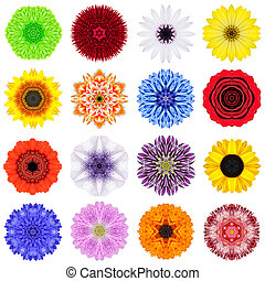 Big Collection of Various Concentric Flowers Isolated on...