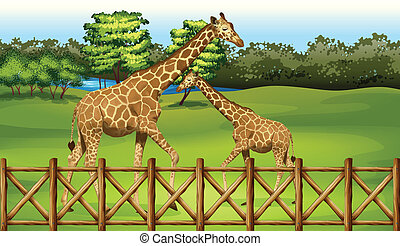 Giraffes in the forest