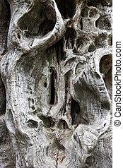 antigas, árvore, tronco