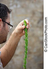 Religious young Jew is preparing for the Sukkot - Bnei Brak...