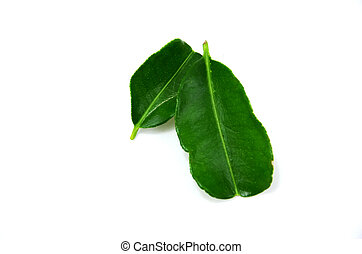 Bergamot leaf isolate on white background