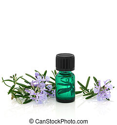 Rosemary Herb Flowers and Essence - Rosemary herb leaf sprig...