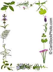 Herb Flower and Leaf Border - Herb flower and leaf sprig...