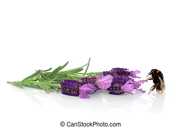 Bumble Bee and Lavender Flowers - Bumble bee with lavender...