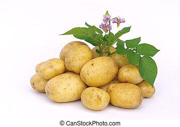 potato 03