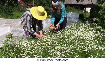 women gather herbs - Zoom in senior grandmother with young...