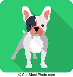 dog icon flat design  - dog French bulldog icon flat design