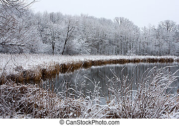 Icy Winter Landscape at a pond surrounded by trees.