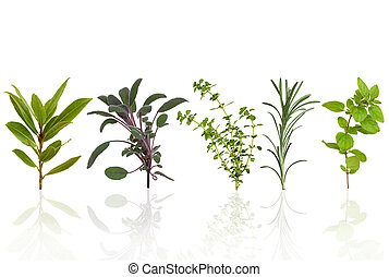 Herb Leaf Selection - Herb leaf selection of bay, purple...