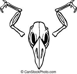 Bird Skull #3