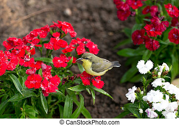 Little bird in garden