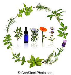 Medicinal and Culinary Herbs - Medicinal and culinary herb...